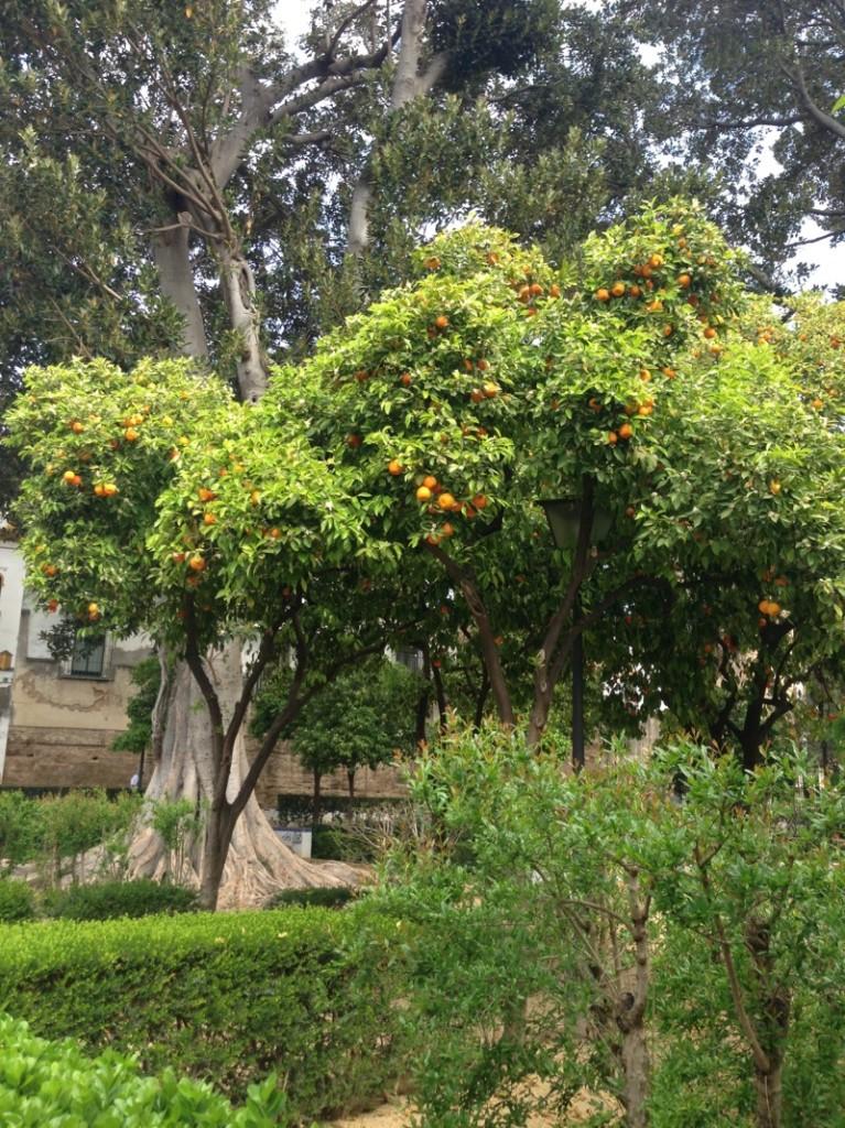 Sevilha_laranjas