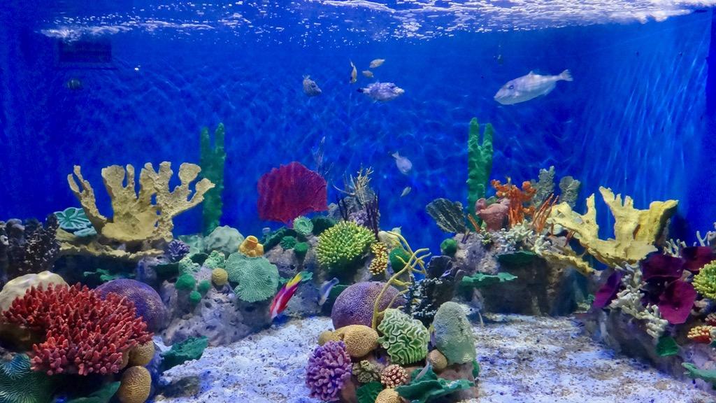 fpm_aquario_aquariocolorido