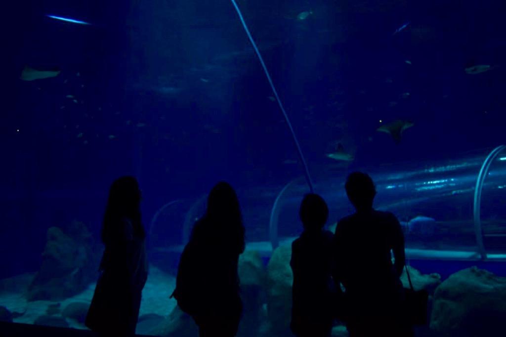 fpm_aquario_blogueiras