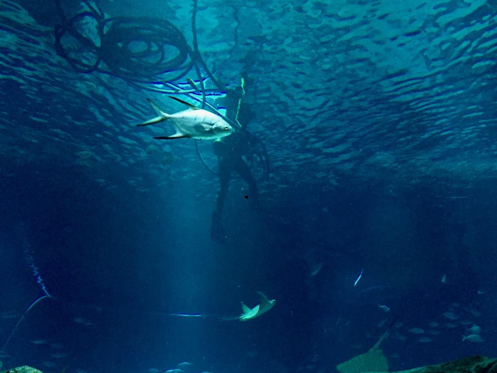fpm_aquario_mergulhador